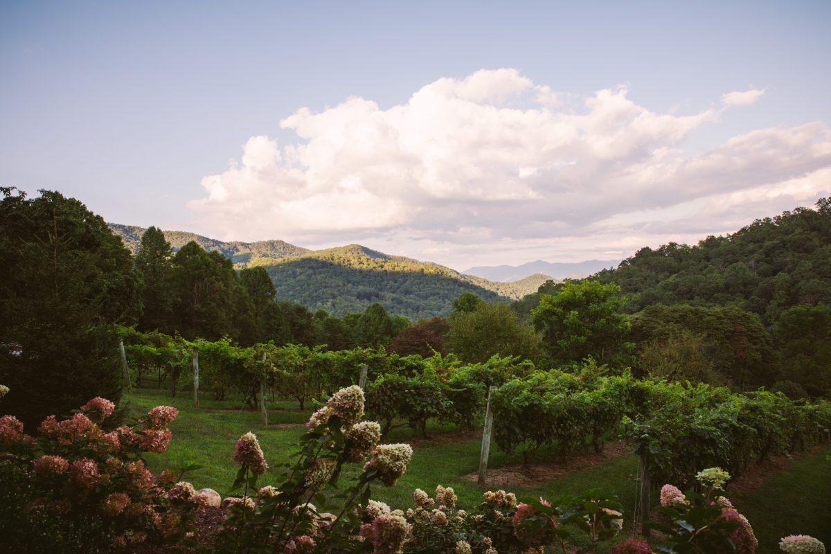 The View @ The Vineyards at Betty's Creek Sylva NC Wedding Photographers