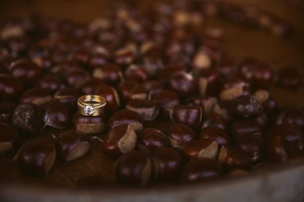 Rings in Chestnuts The Vineyards at Betty's Creek Sylva NC Wedding Photographers