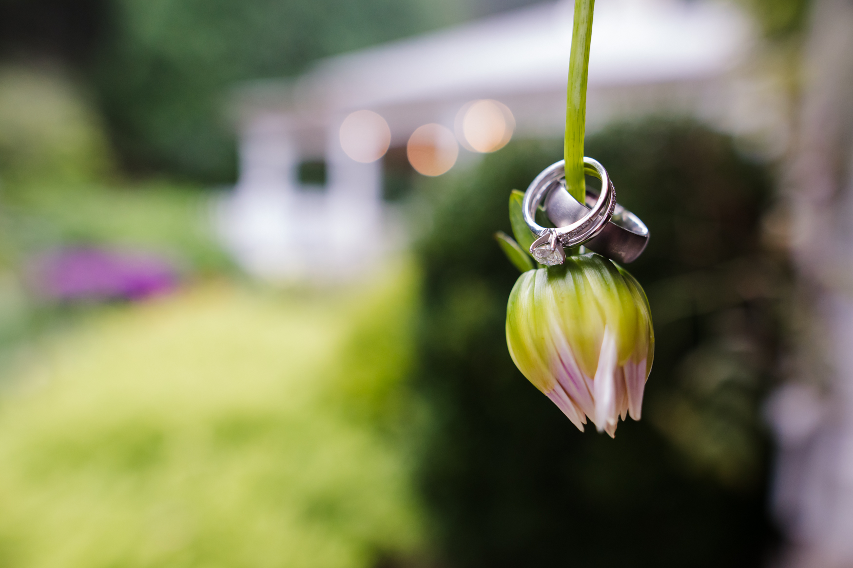 Rings Hanging on Flower Waynesville NC Wedding Photography