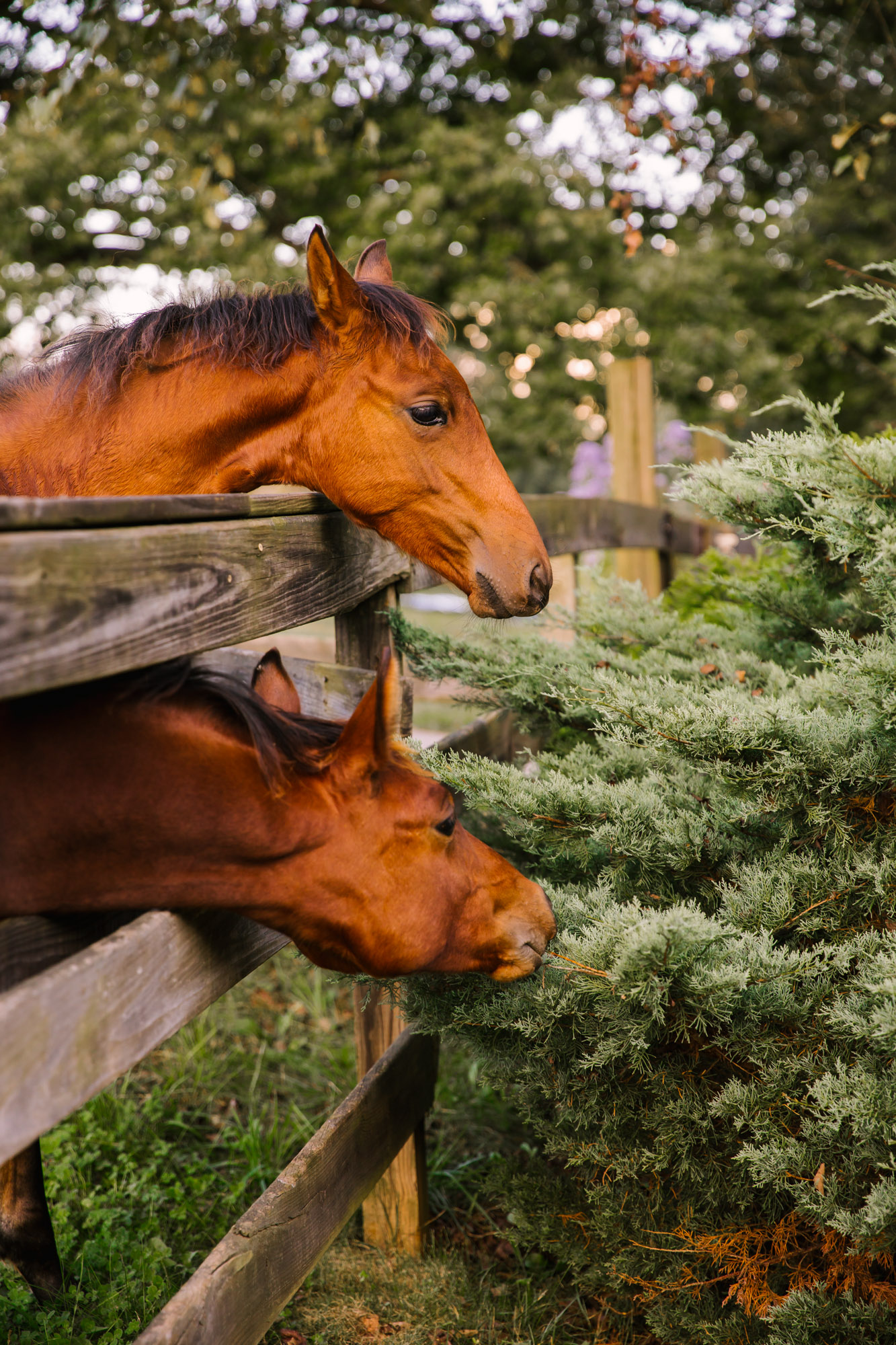 Waynesville NC Wedding Photography | Horses on the Farm