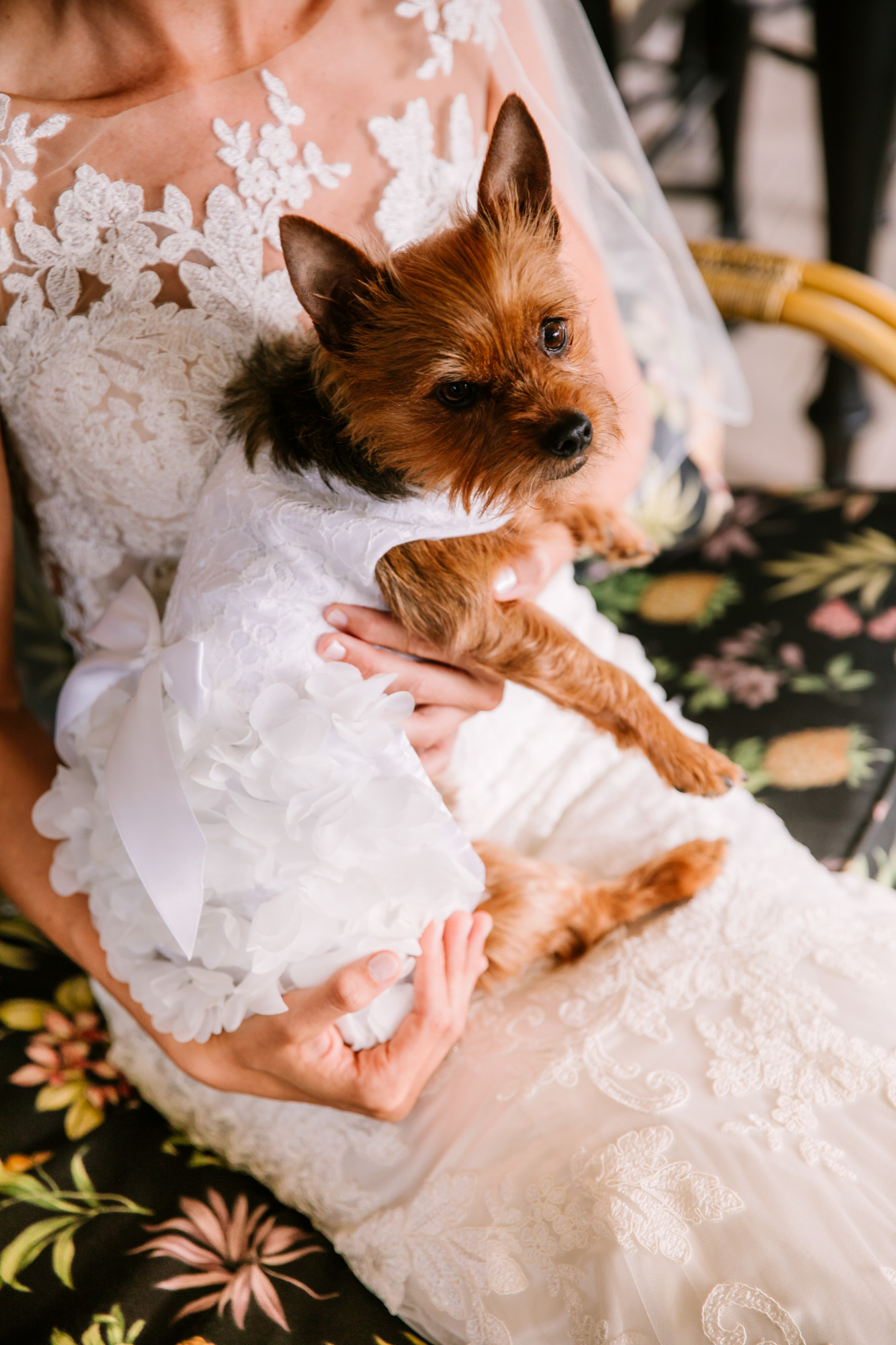 Waynesville, NC Wedding Photography | Terrier in mini wedding dress