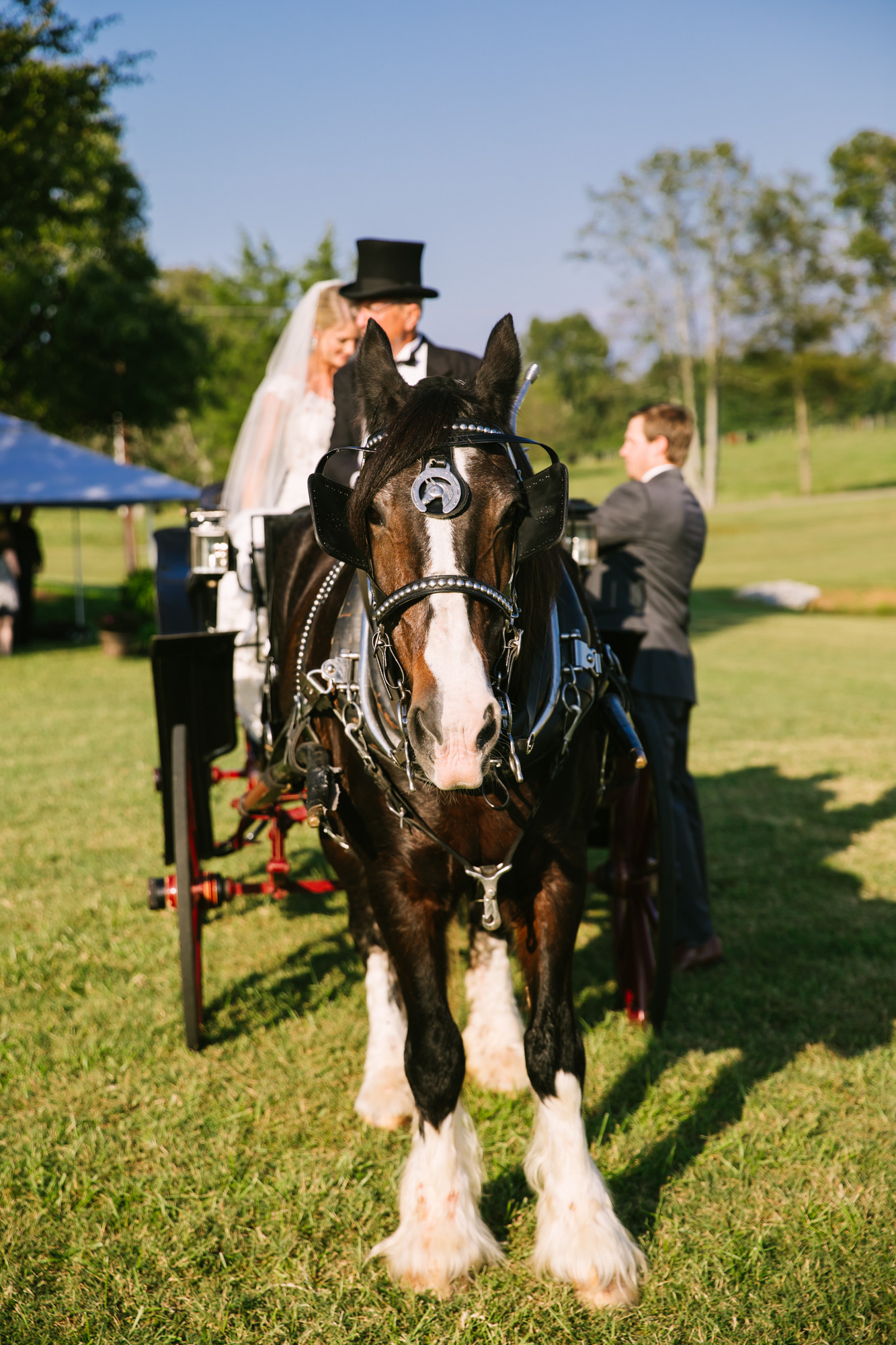 Waynesville, NC Wedding Photography | Wedding Ceremony Horse and Carriage
